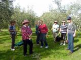 Olive picking for SIBV Optima Oil